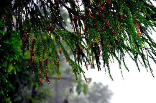 The dew drops hanging, something magical about them... the whole tree was full with droplets in the end which felt like pearls hanging down - This is one of my fav pictures from the trip